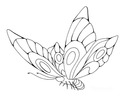 Butterfly Coloring Pages Beautiful Patterned Wings