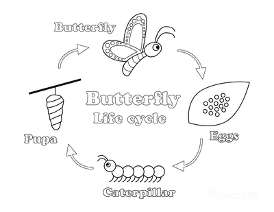Butterfly Coloring Pages Life Cycle