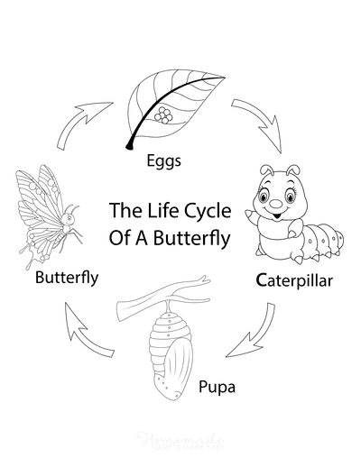 Butterfly Coloring Pages Life Cycle Cartoon