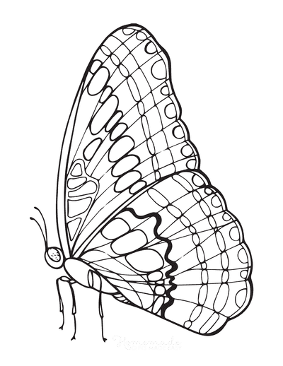 Butterfly Coloring Pages Outline Wing Veins Side View
