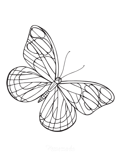 Butterfly Coloring Pages Simple Outline Wing Veins