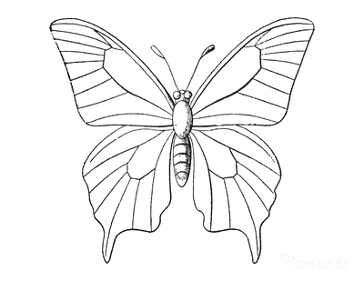 Butterfly Coloring Pages Sketch Patterned Wings