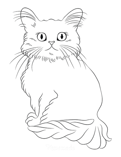 Cat Coloring Pages Cat Outline Fluffy