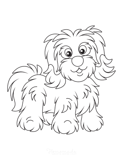 Dog Coloring Pages Bichon Havanese Cute Outline