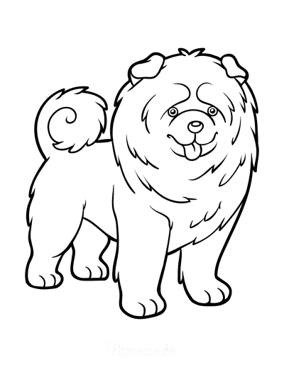 Dog Coloring Pages Chow Chow Curled Tail Outline