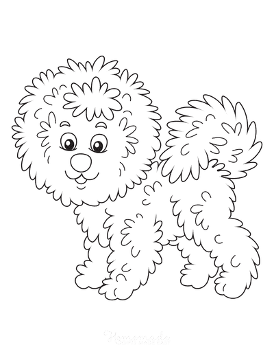 Dog Coloring Pages Curly Bichon Frise Cute Cartoon