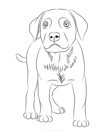 Dog Coloring Pages Labrador Outline