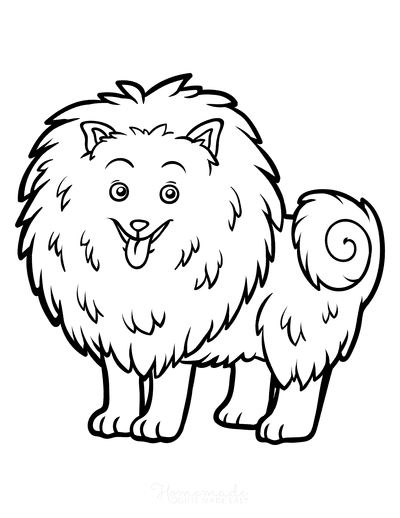 Dog Coloring Pages Pomeranian Outline
