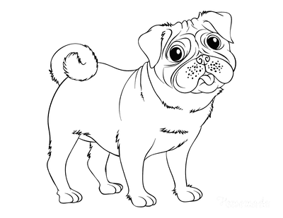 Dog Coloring Pages Pug Outline