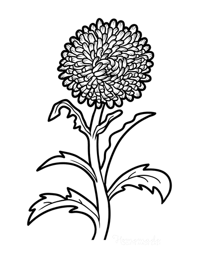Flower Coloring Pages Botanical Aster