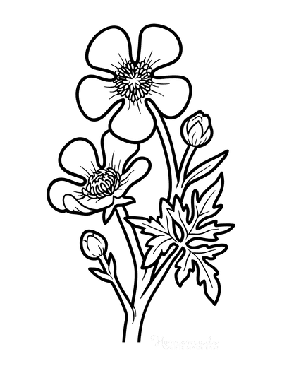 Flower Coloring Pages Botanical Buttercup