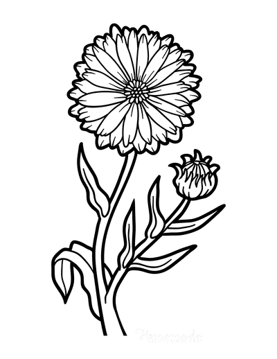 Flower Coloring Pages Botanical Calendula