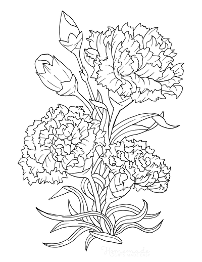 Flower Coloring Pages Botanical Carnation