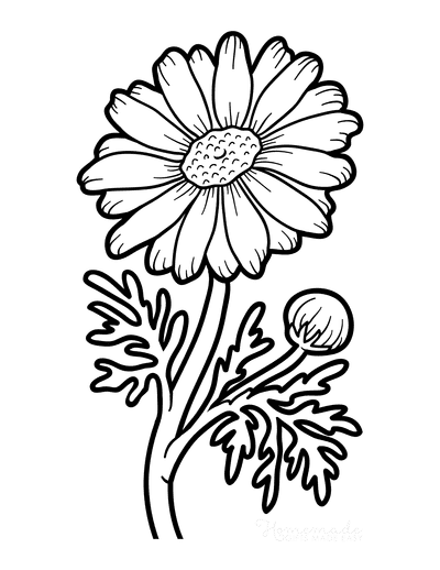 Flower Coloring Pages Botanical Chamomile