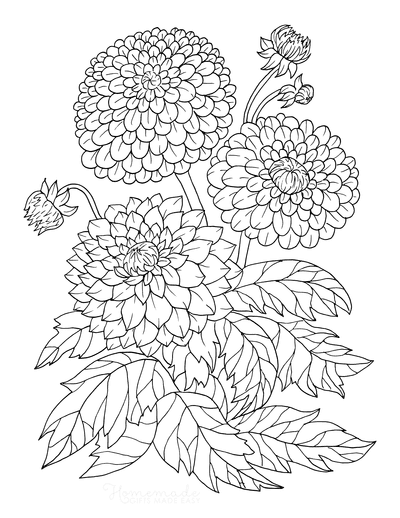 Flower Coloring Pages Botanical Dahlia