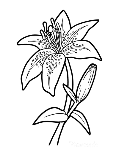 Flower Coloring Pages Botanical Lily