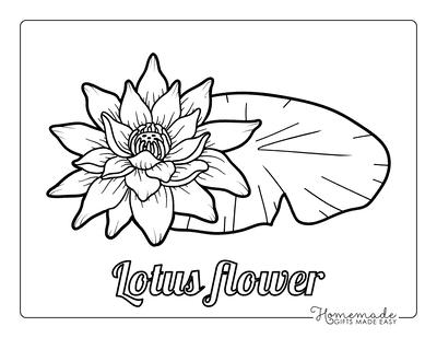 Flower Coloring Pages Botanical Lotus