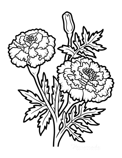 Flower Coloring Pages Botanical Marigold