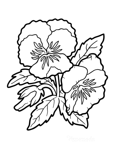 Flower Coloring Pages Botanical Pansy