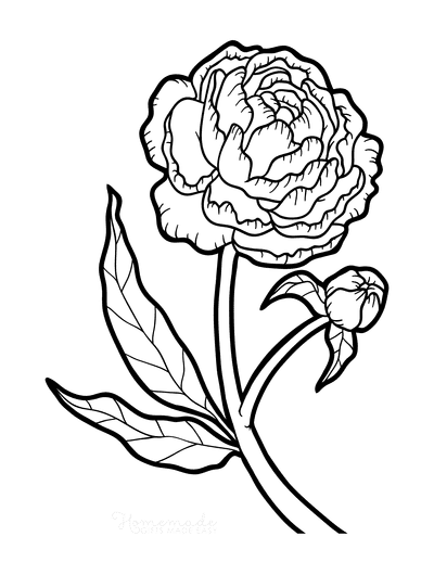 Flower Coloring Pages Botanical Peony