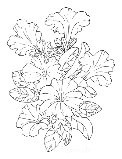 Flower Coloring Pages Botanical Petunia