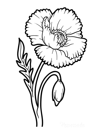 Flower Coloring Pages Botanical Poppy