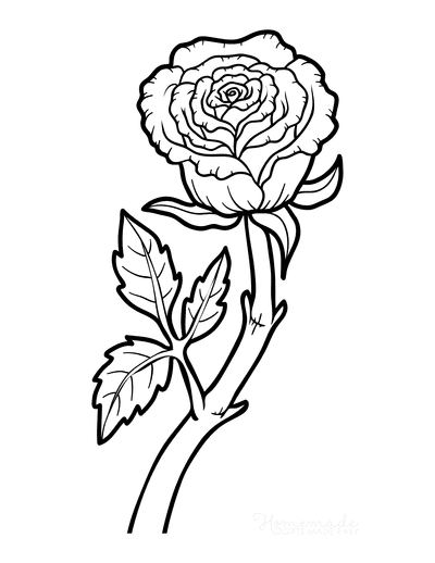 Flower Coloring Pages Botanical Rose