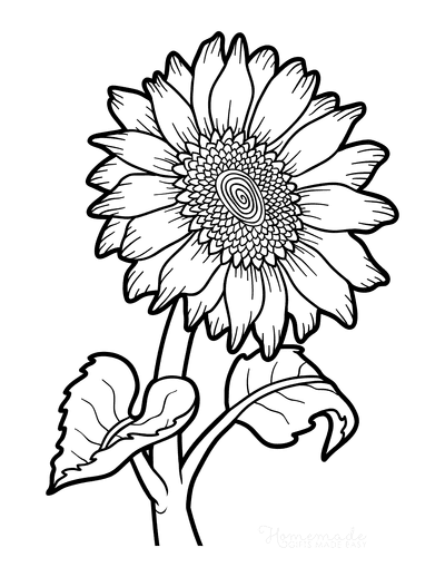Flower Coloring Pages Botanical Sunflower