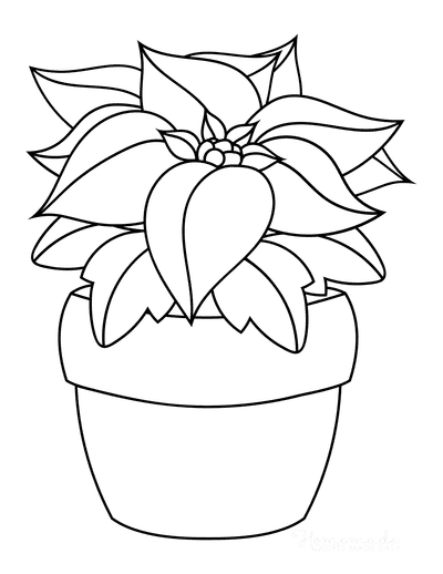 Flower Coloring Pages Christmas Poinsettia
