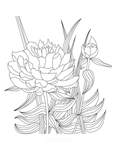 Flower Coloring Pages Detailed Peony Drawing