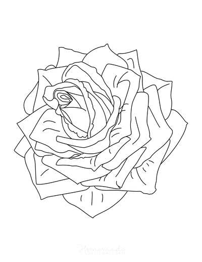 Flower Coloring Pages Detailed Rose