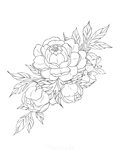 Flower Coloring Pages Peony Botanical