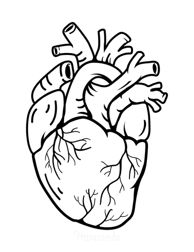 Heart Coloring Pages Anatomical Heart