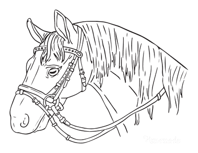 Horse Coloring Pages Head Wearing Bridle