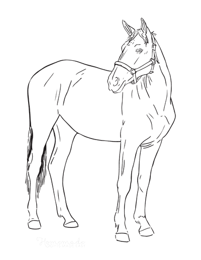 Horse Coloring Pages Sketch Simple Outline