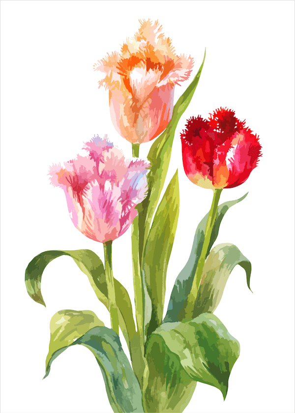 free printable mothers day cards - water color tulips