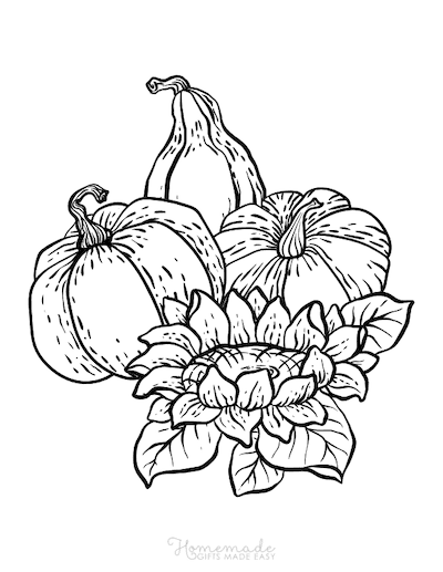 Pumpkin Coloring Pages 3 Squash Pumpkins Flower