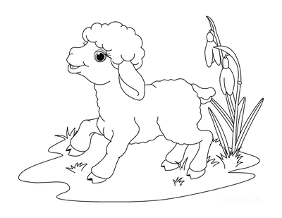 Spring Coloring Pages Cute Lamb