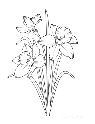 Spring Coloring Pages Daffodils