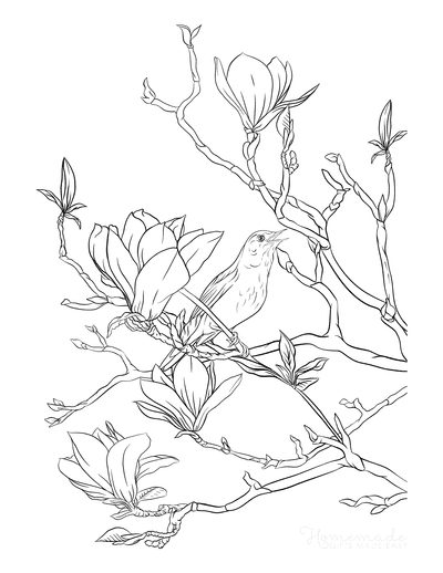 Spring Coloring Pages Magnolia Nightingale