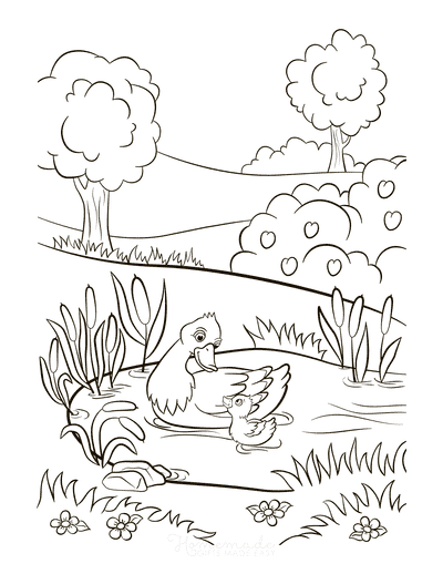 Spring Coloring Pages Mother Duck Duckling Pond