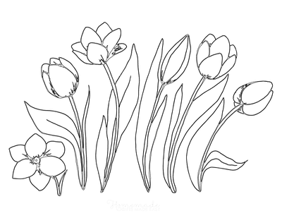Spring Coloring Pages Tulip Series