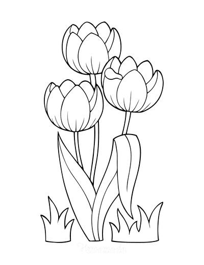 Spring Coloring Pages Tulips