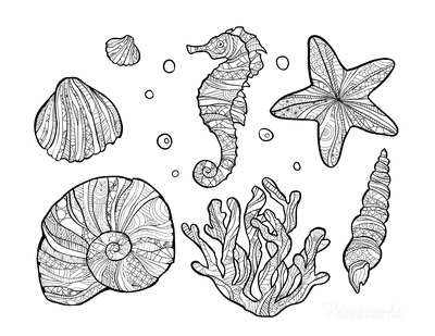 Summer Coloring Pages Sea Shell Doodle for Adults