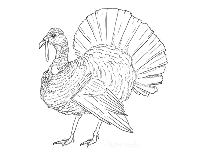 Turkey Coloring Pages Realistic Adult to Color