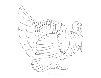 Turkey Coloring Pages Side View