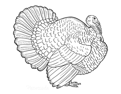Turkey Coloring Pages Side View Detailed Feathers
