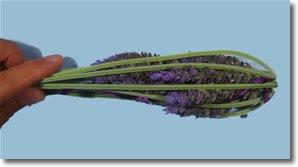 lavender bottles step 4