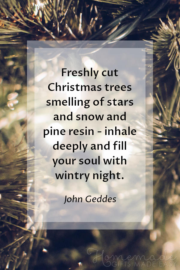 merry christmas images misc freshly cut geddes 600x900