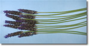 how to make lavender wands step 1
